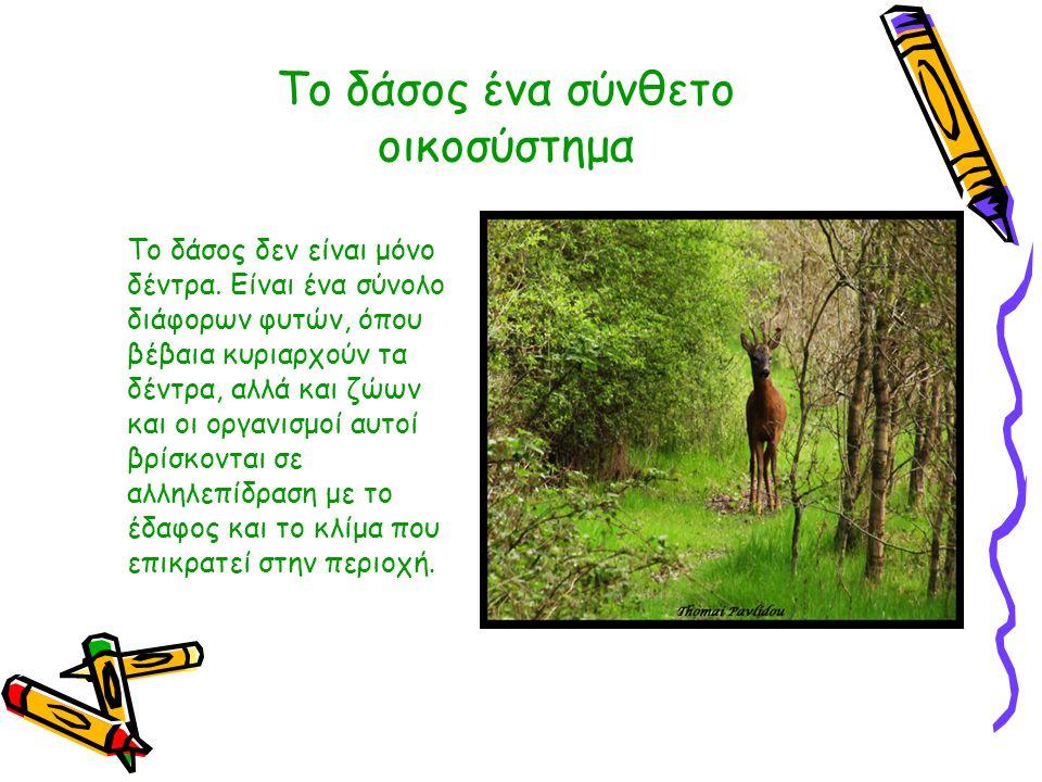 Το δάσος ένα σύνθετο οικοσύστημα