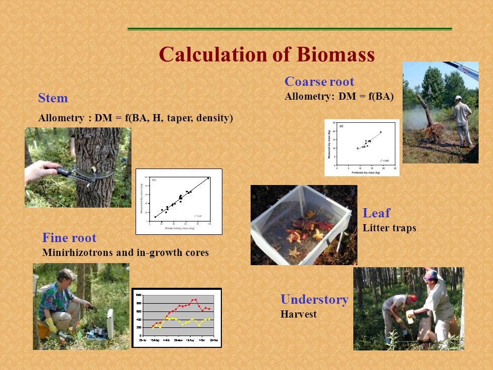 Calculation of Biomass