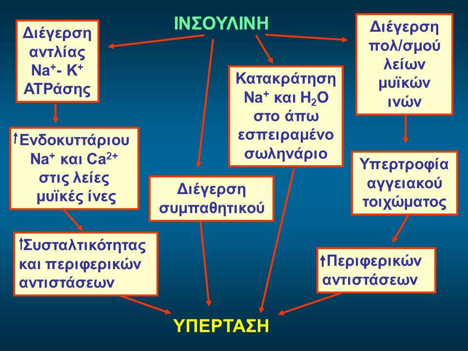 ΙΝΣΟΥΛΙΝΗ ΥΠΕΡΤΑΣΗ Διέγερση πολ/σμού λείων μυϊκών ινών