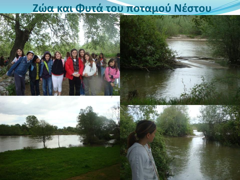 Ζώα και Φυτά του ποταμού Νέστου