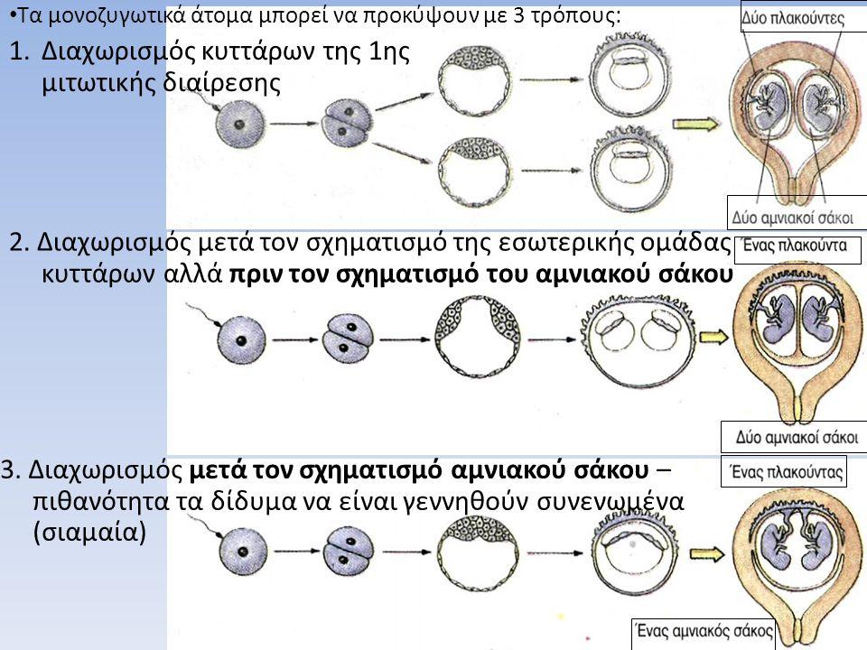 Διαχωρισμός κυττάρων της 1ης μιτωτικής διαίρεσης
