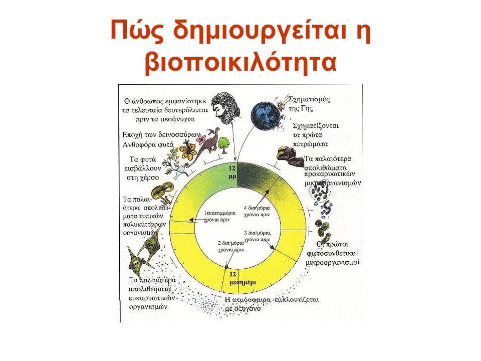 Πώς δημιουργείται η βιοποικιλότητα