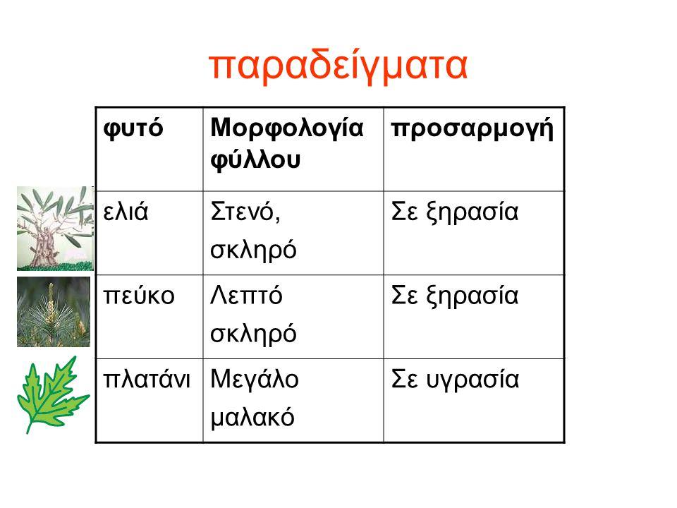 παραδείγματα φυτό Μορφολογία φύλλου προσαρμογή ελιά Στενό, σκληρό