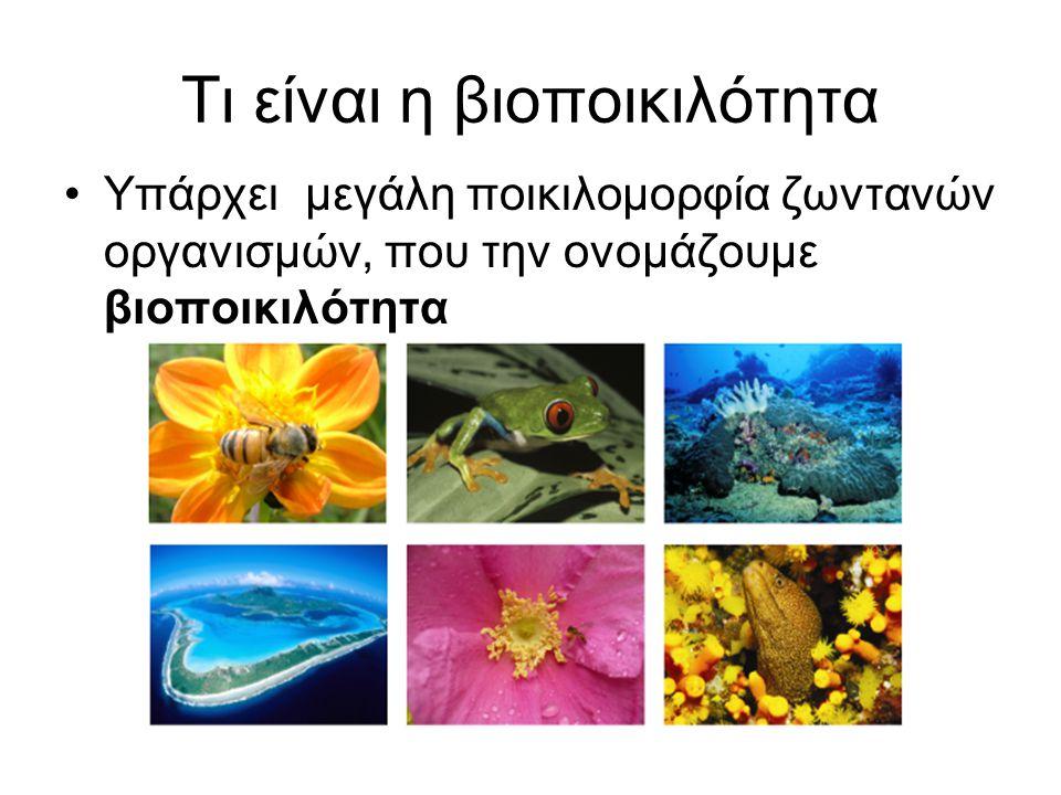 Τι είναι η βιοποικιλότητα