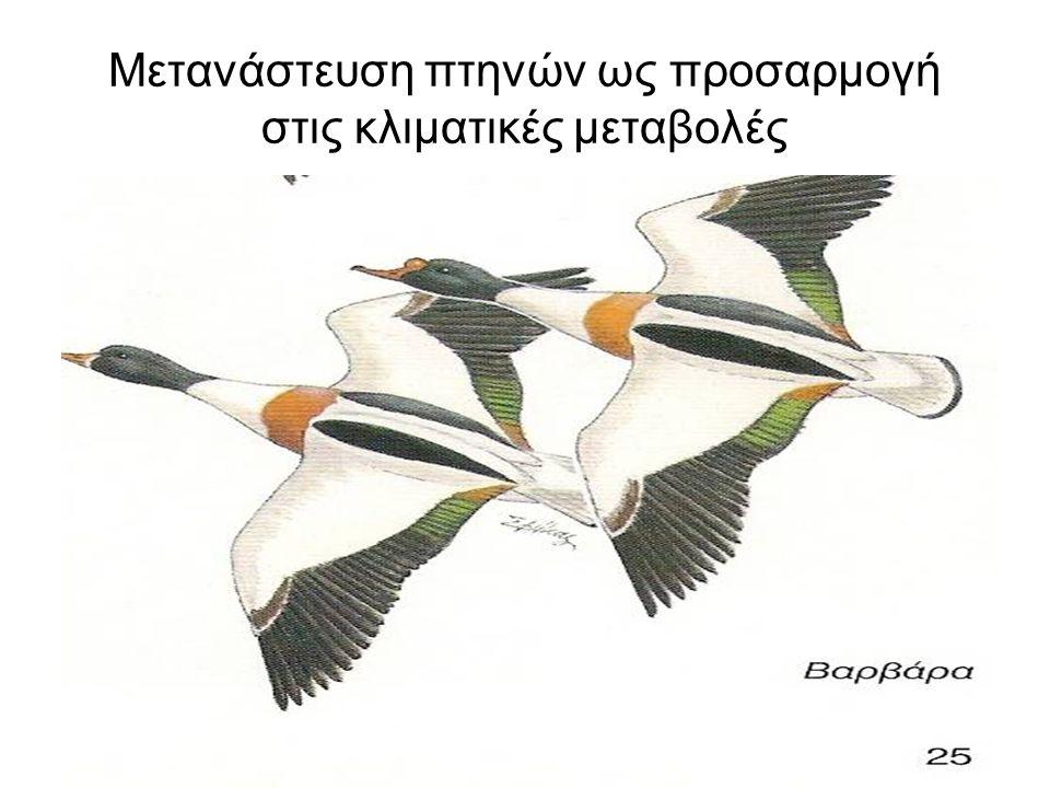 Μετανάστευση πτηνών ως προσαρμογή στις κλιματικές μεταβολές