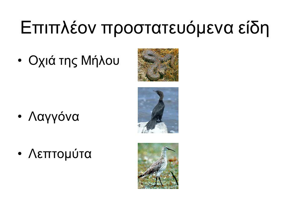 Επιπλέον προστατευόμενα είδη