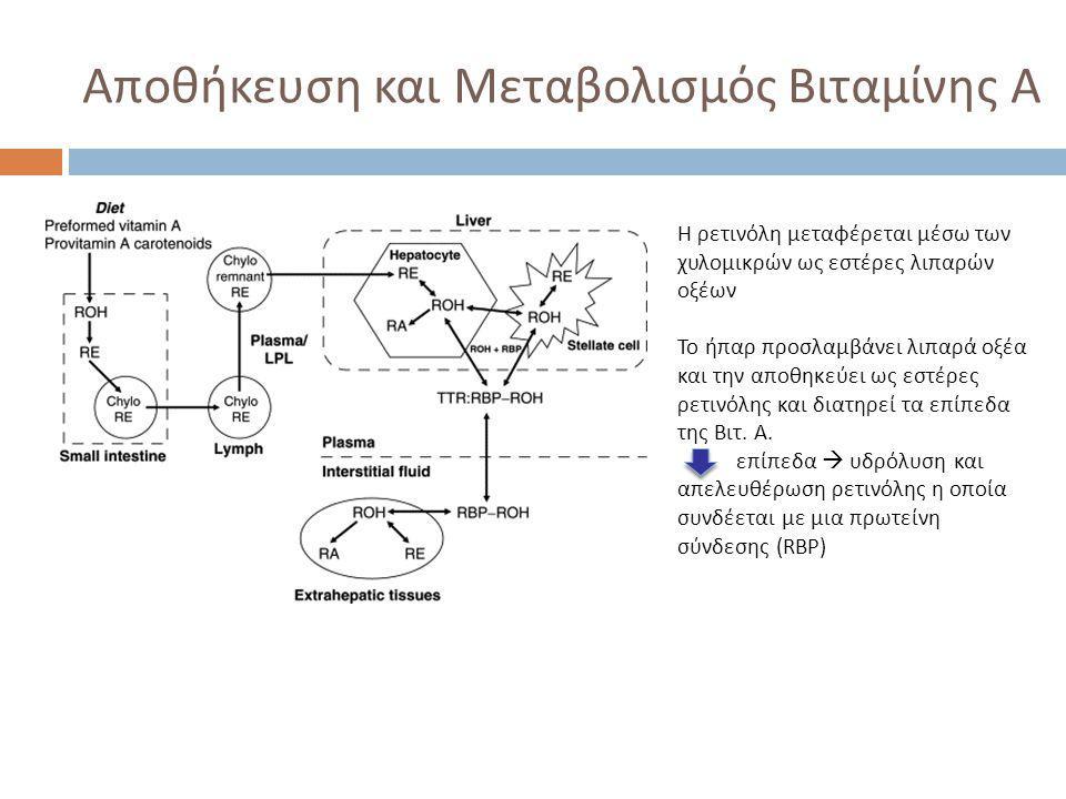Αποθήκευση και Μεταβολισμός Βιταμίνης Α