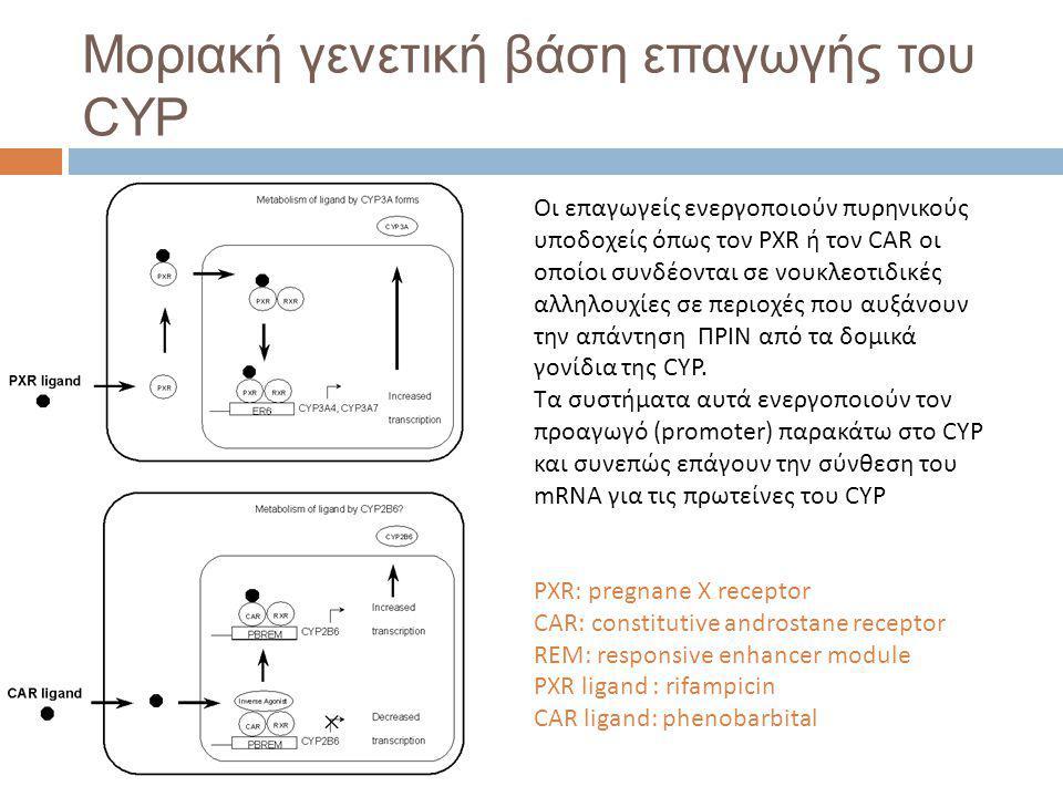 Μοριακή γενετική βάση επαγωγής του CYP
