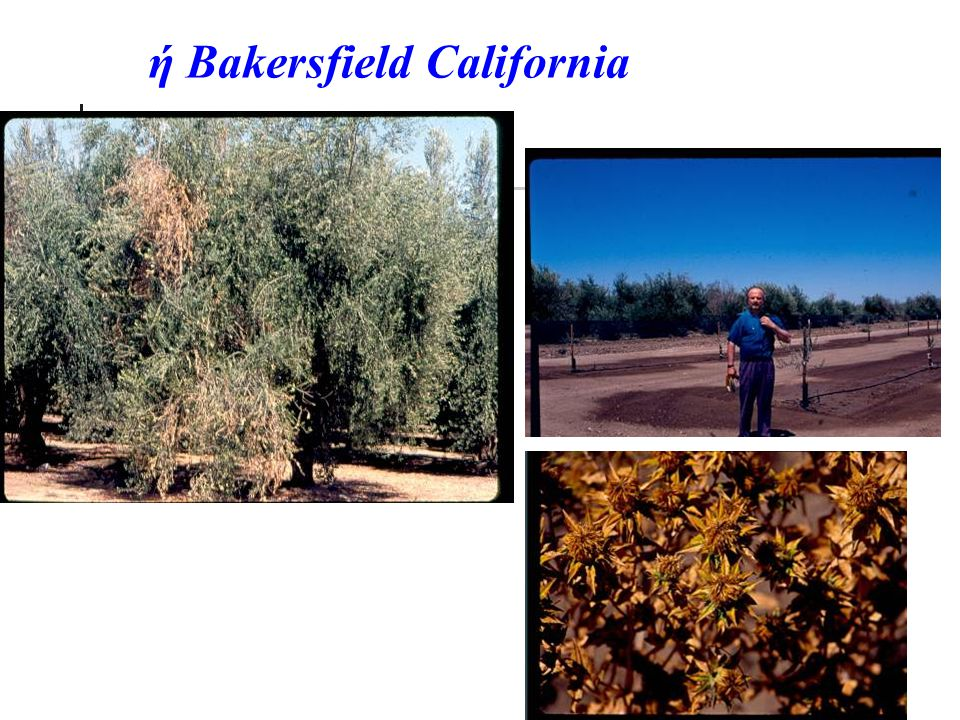 ή Bakersfield California