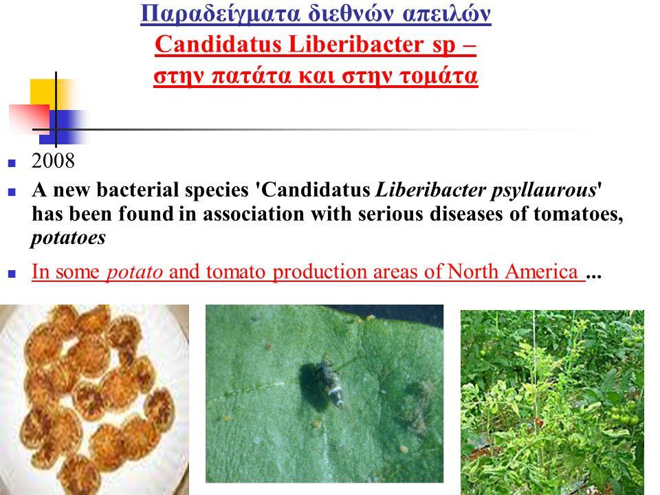 Παραδείγματα διεθνών απειλών Candidatus Liberibacter sp – στην πατάτα και στην τομάτα