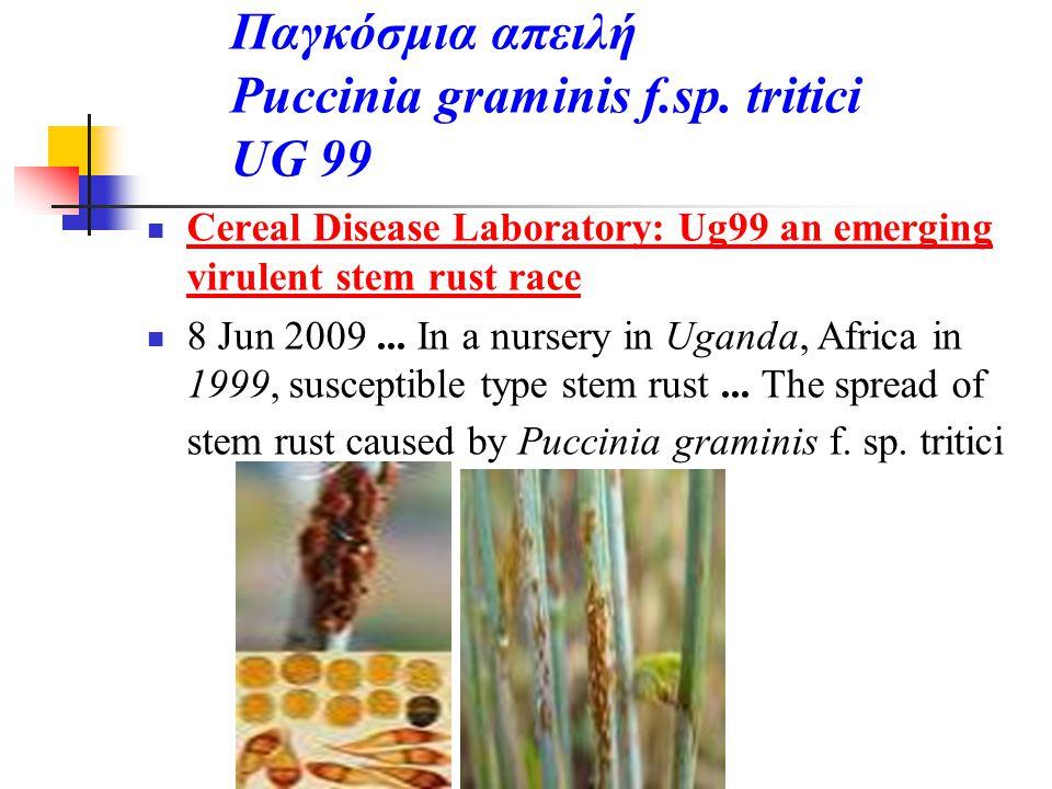 Παγκόσμια απειλή Puccinia graminis f.sp. tritici UG 99