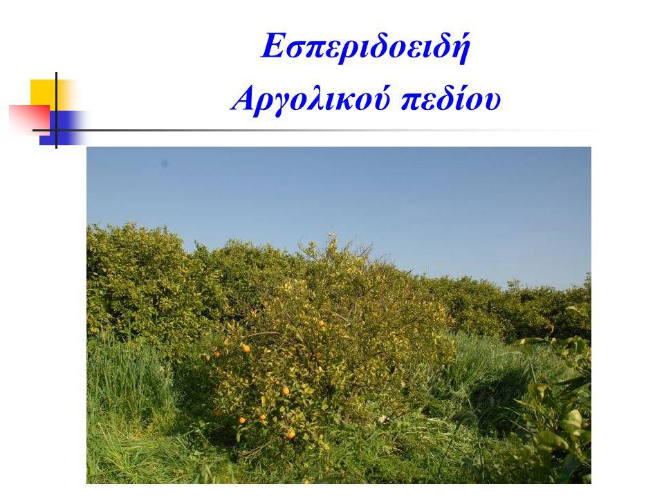 Εσπεριδοειδή Αργολικού πεδίου