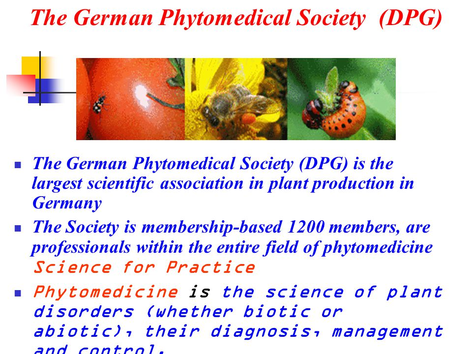 The German Phytomedical Society (DPG)