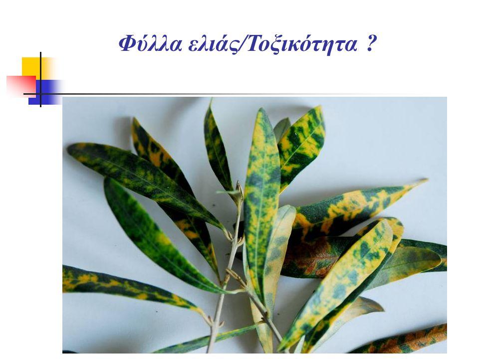 Φύλλα ελιάς/Τοξικότητα