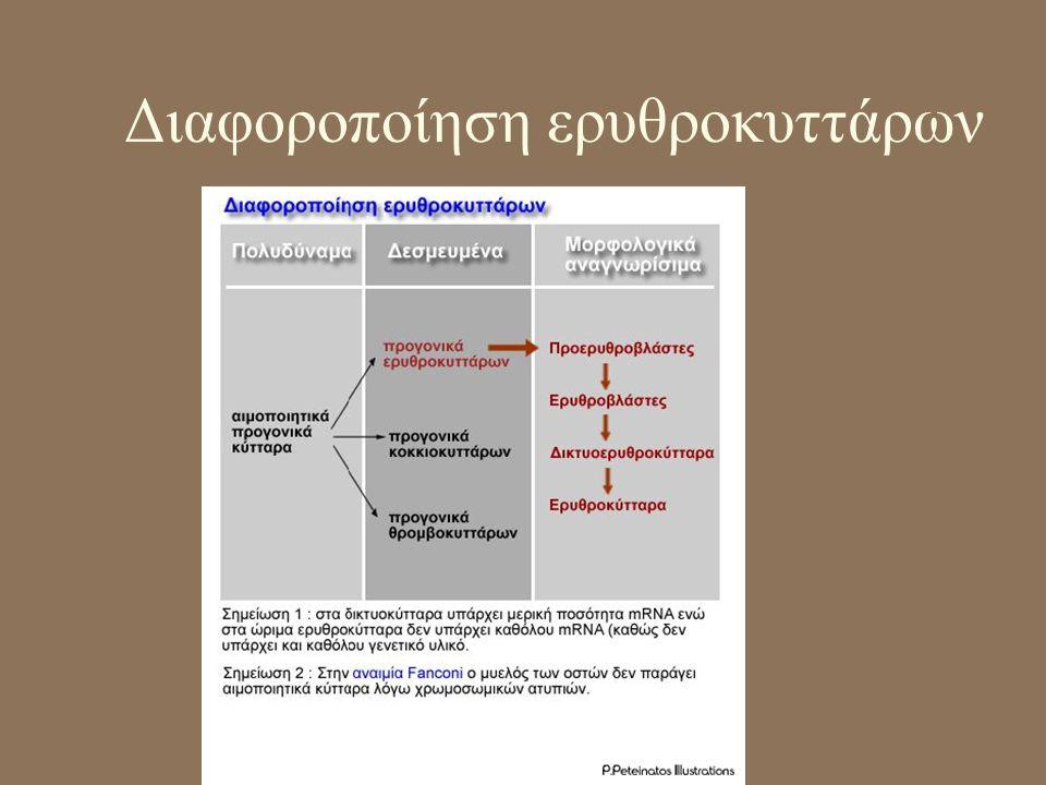 Διαφοροποίηση ερυθροκυττάρων
