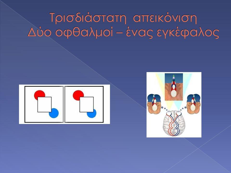 Τρισδιάστατη απεικόνιση Δύο οφθαλμοί – ένας εγκέφαλος