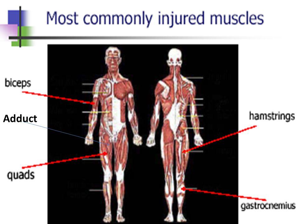 Συχνότερα τραυματιζόμενοι μύες