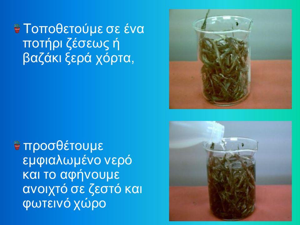 Τοποθετούμε σε ένα ποτήρι ζέσεως ή βαζάκι ξερά χόρτα,