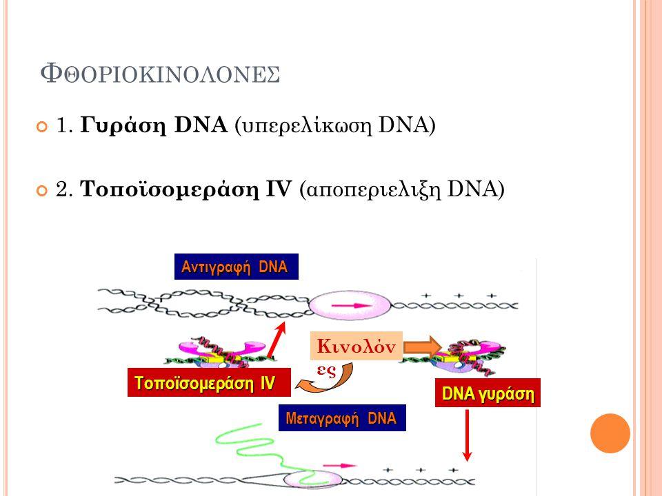 Φθοριοκινολονεσ 1. Γυράση DNA (υπερελίκωση DNA) ).