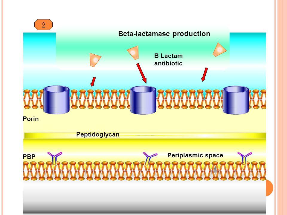 Beta-lactamase production