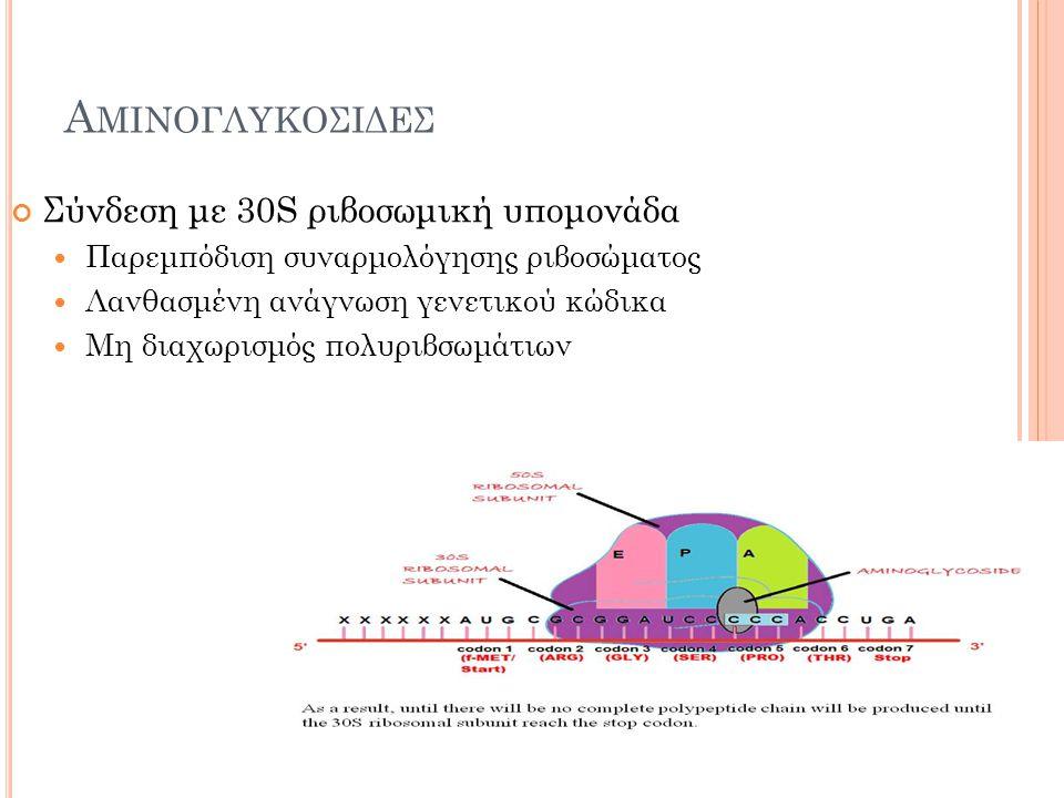 Αμινογλυκοσιδεσ Σύνδεση με 30S ριβοσωμική υπομονάδα