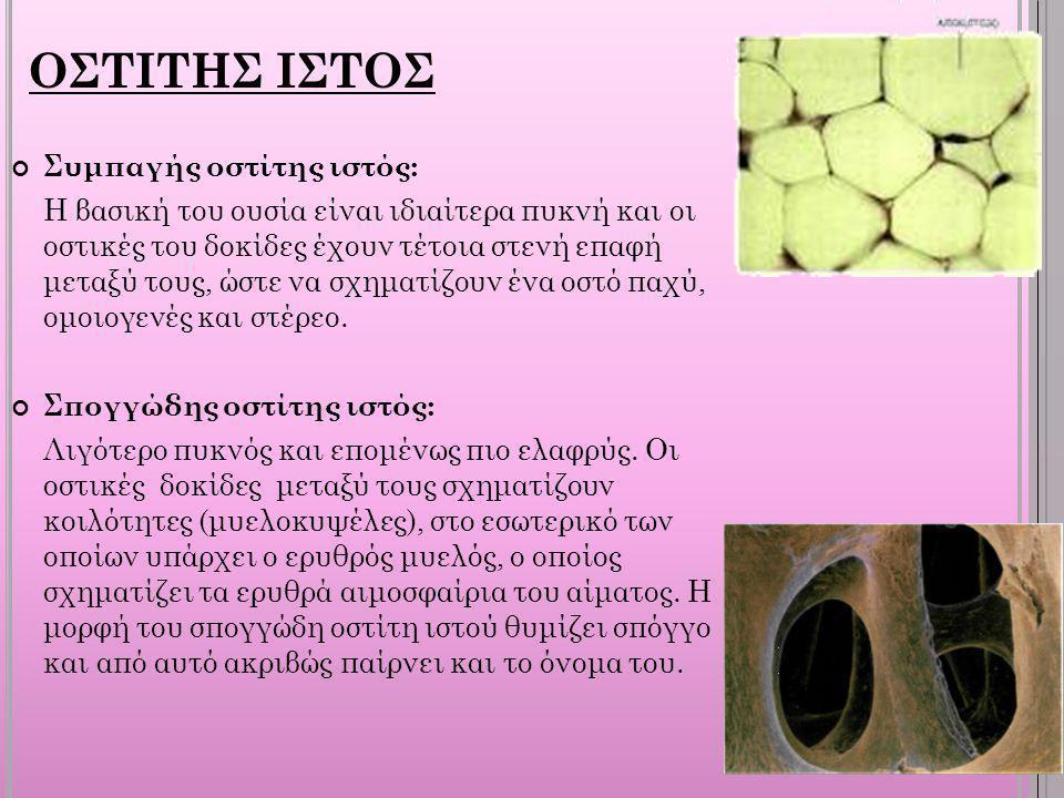 ΟΣΤΙΤΗΣ ΙΣΤΟΣ Συμπαγής οστίτης ιστός: