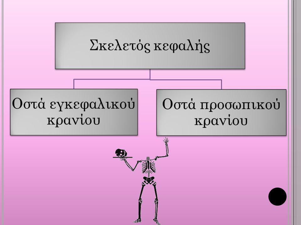 Οστά εγκεφαλικού κρανίου Οστά προσωπικού κρανίου