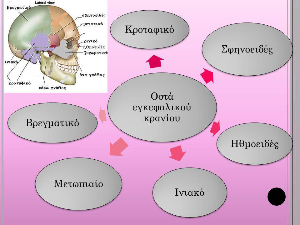 Οστά εγκεφαλικού κρανίου