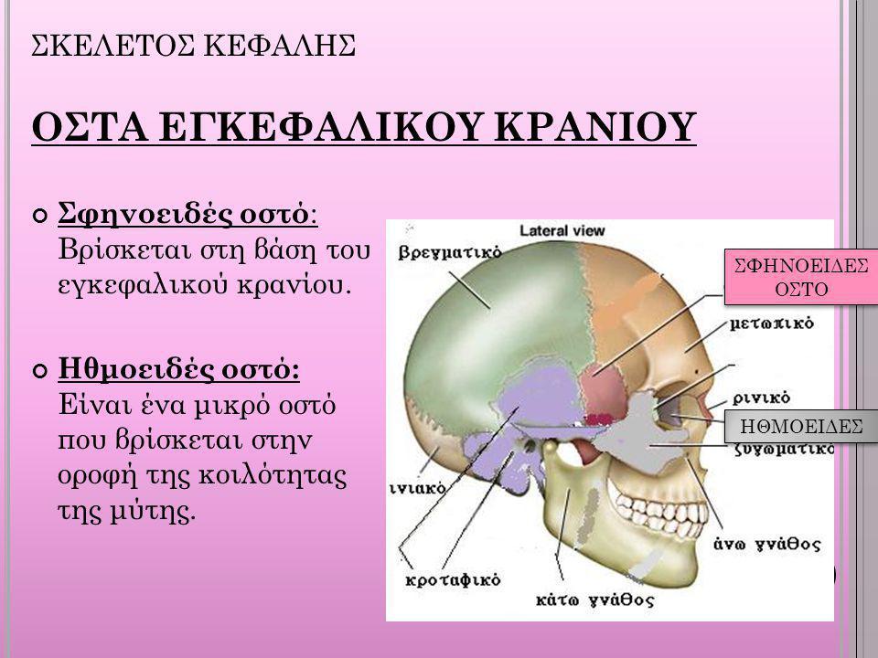 ΟΣΤΑ ΕΓΚΕΦΑΛΙΚΟΥ ΚΡΑΝΙΟΥ