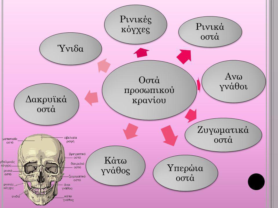 Οστά προσωπικού κρανίου