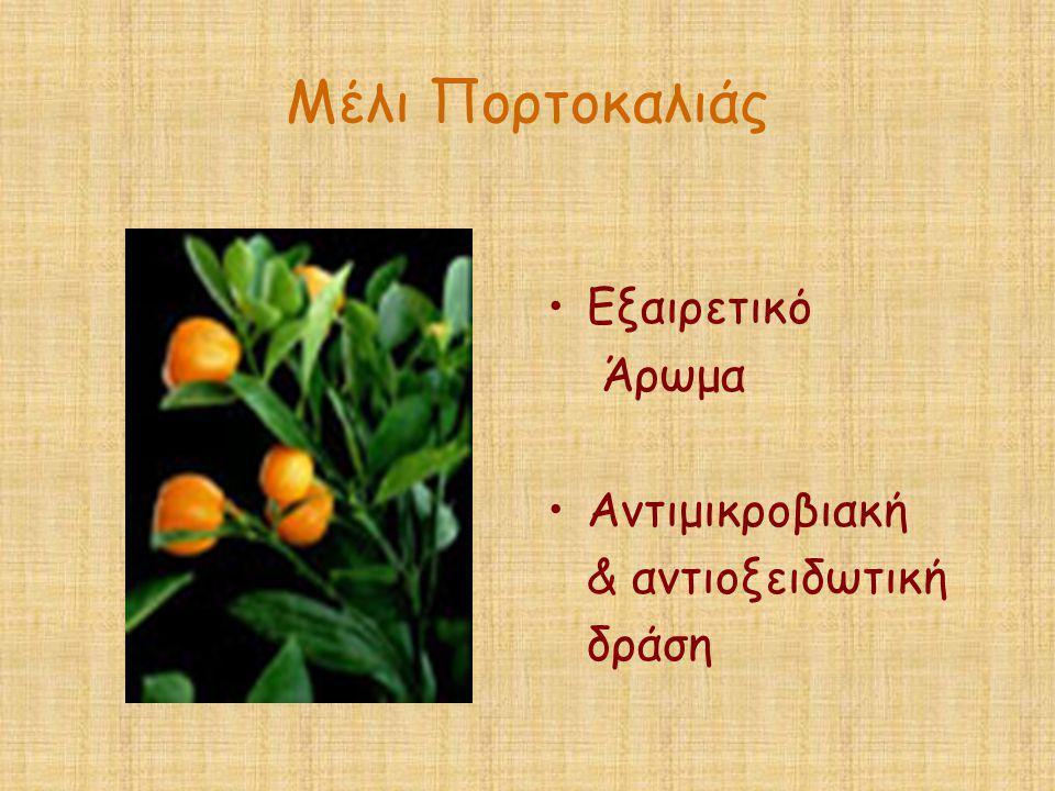 Μέλι Πορτοκαλιάς Εξαιρετικό Άρωμα Αντιμικροβιακή & αντιοξειδωτική