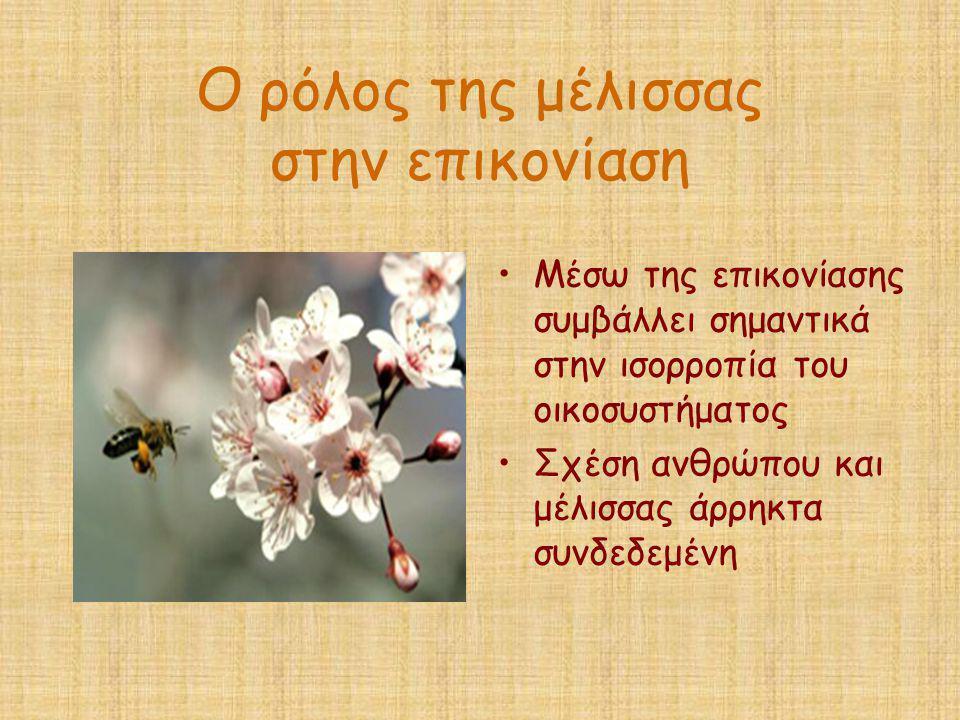 Ο ρόλος της μέλισσας στην επικονίαση