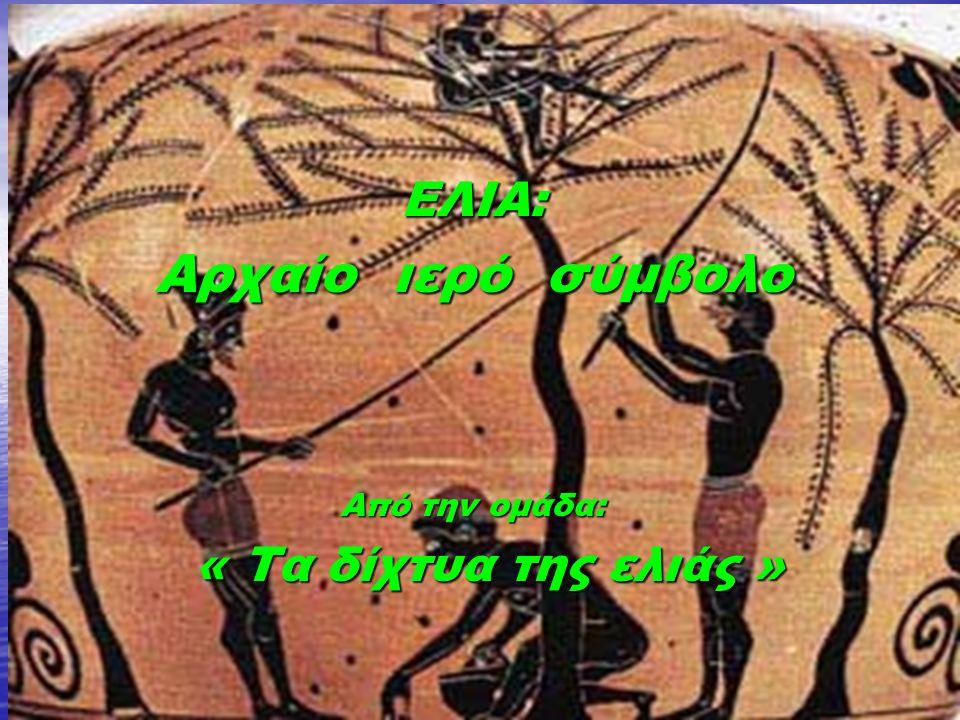 ΕΛΙΑ: Αρχαίο ιερό σύμβολο Από την ομάδα: « Τα δίχτυα της ελιάς »