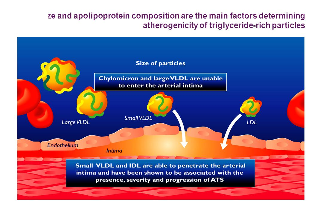 Size and apolipoprotein composition are the main factors determining atherogenicity of triglyceride-rich particles