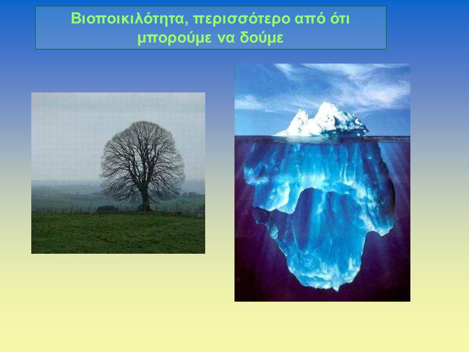 Βιοποικιλότητα, περισσότερο από ότι μπορούμε να δούμε