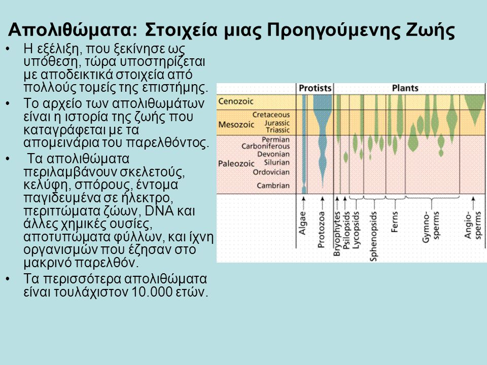Απολιθώματα: Στοιχεία μιας Προηγούμενης Ζωής