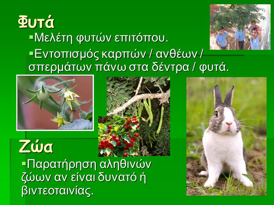 Φυτά Ζώα Μελέτη φυτών επιτόπου.