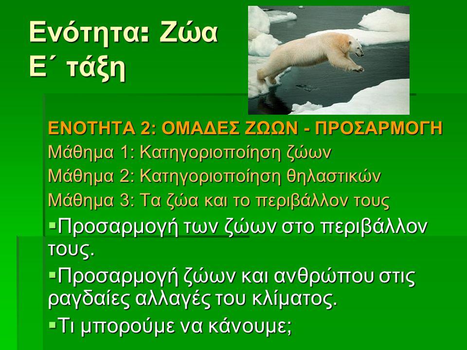 Ενότητα: Ζώα Ε΄ τάξη Προσαρμογή των ζώων στο περιβάλλον τους.