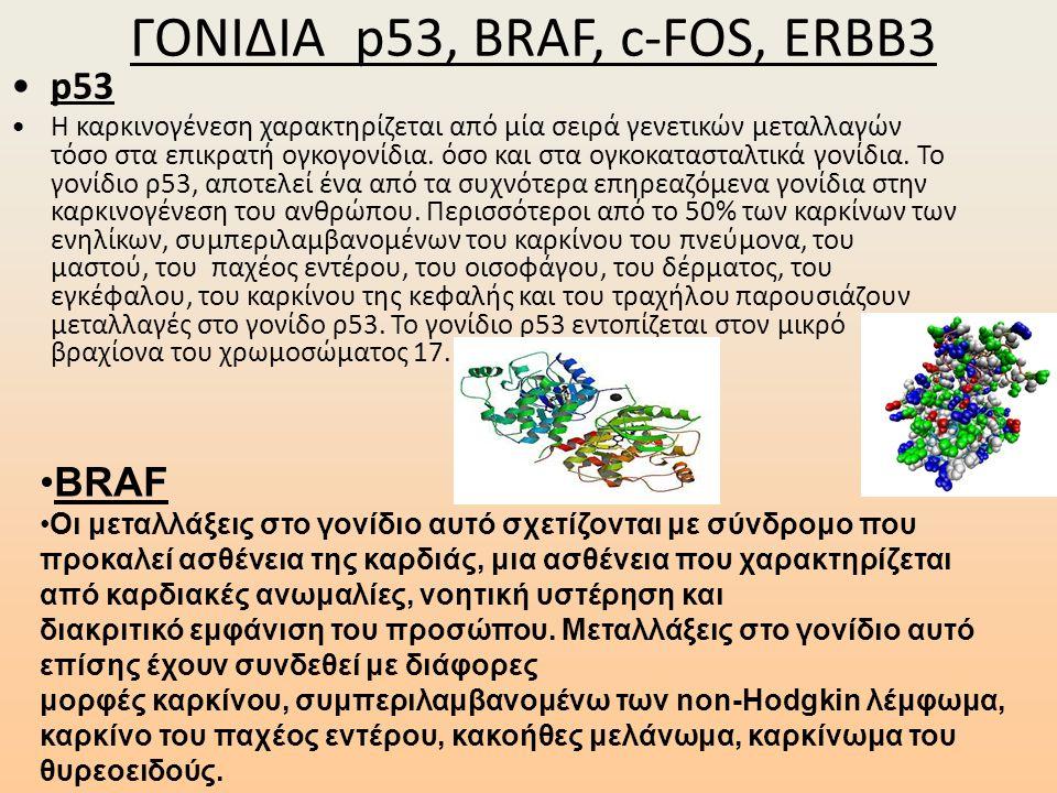 ΓΟΝΙΔΙΑ p53, BRAF, c-FOS, ERBB3