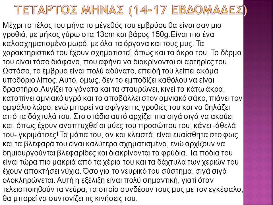 ΤΕΤΑΡΤΟΣ ΜΗΝΑΣ (14-17 εβδομΑδες)