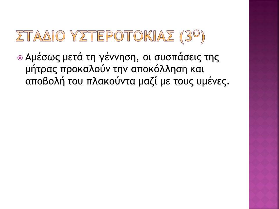ΣΤΑΔΙΟ ΥΣΤΕΡΟΤΟΚΙΑΣ (3Ο)