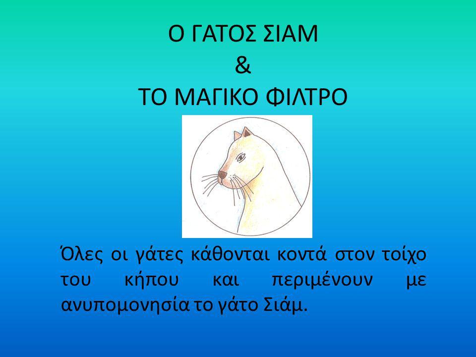 Ο ΓΑΤΟΣ ΣΙΑΜ & ΤΟ ΜΑΓΙΚΟ ΦΙΛΤΡΟ