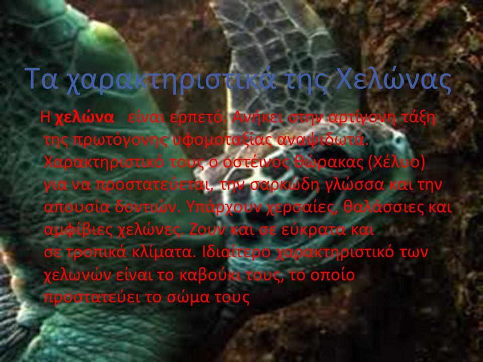 Τα χαρακτηριστικά της Χελώνας
