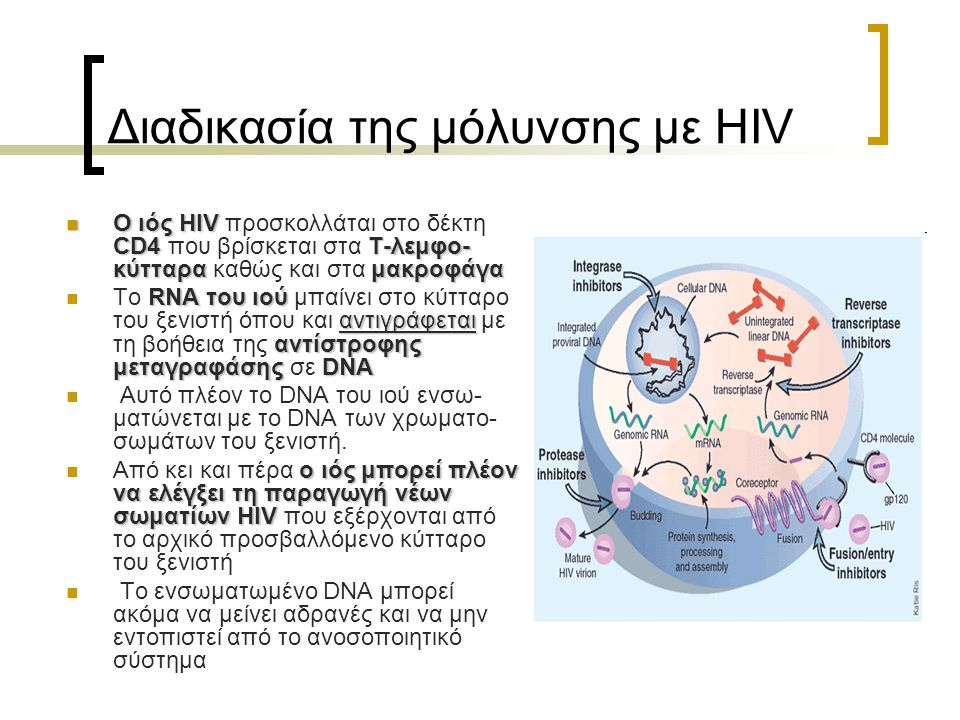Διαδικασία της μόλυνσης με HIV