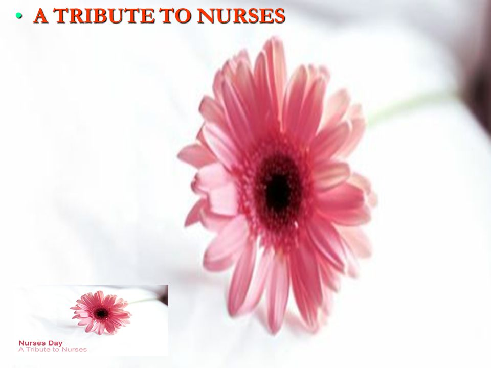 A TRIBUTE TO NURSES