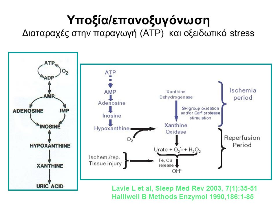 Υποξία/επανοξυγόνωση Διαταραχές στην παραγωγή (ATP) και οξειδωτικό stress
