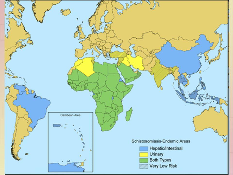 Η αφρική είναι η βαρύτερα προσβεβλημένη περιοχή
