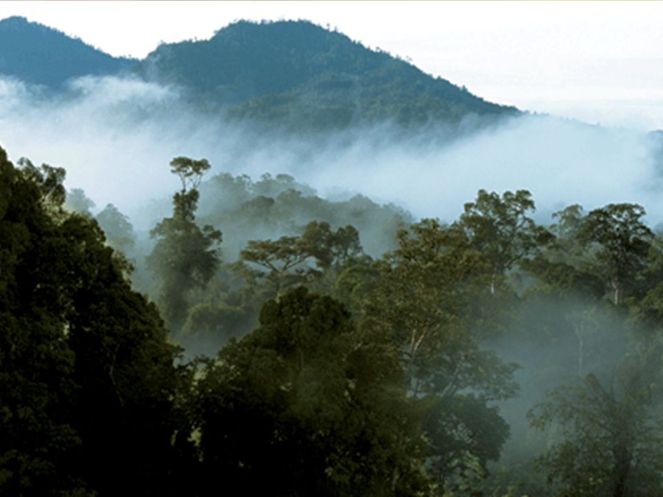 Ταξιδιωτικό ιστορικό Διακοπές για 2 εβδομάδες στη Sarawak, Βόρνεο