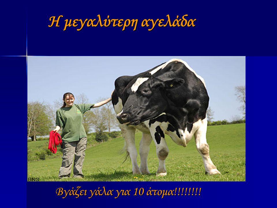 Η μεγαλύτερη αγελάδα Βγάζει γάλα για 10 άτομα!!!!!!!!
