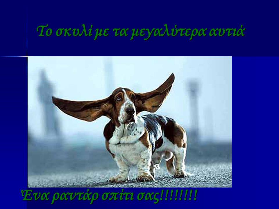Το σκυλί με τα μεγαλύτερα αυτιά